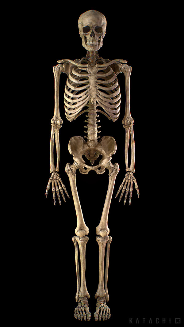 Skeleton full body_01