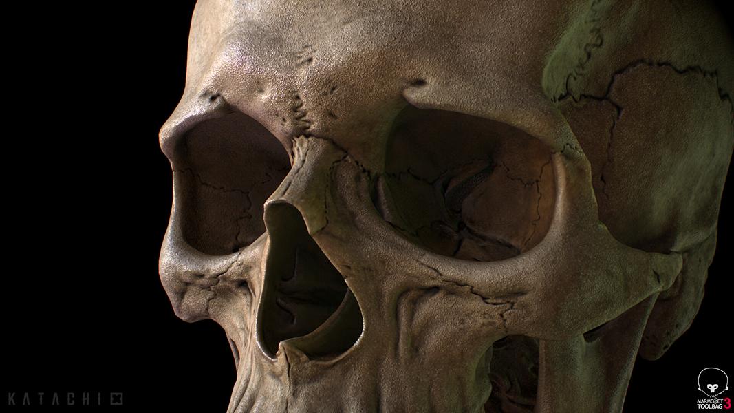 Skeleton full body_03